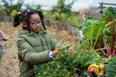 Kids in the garden at Harlem Grown